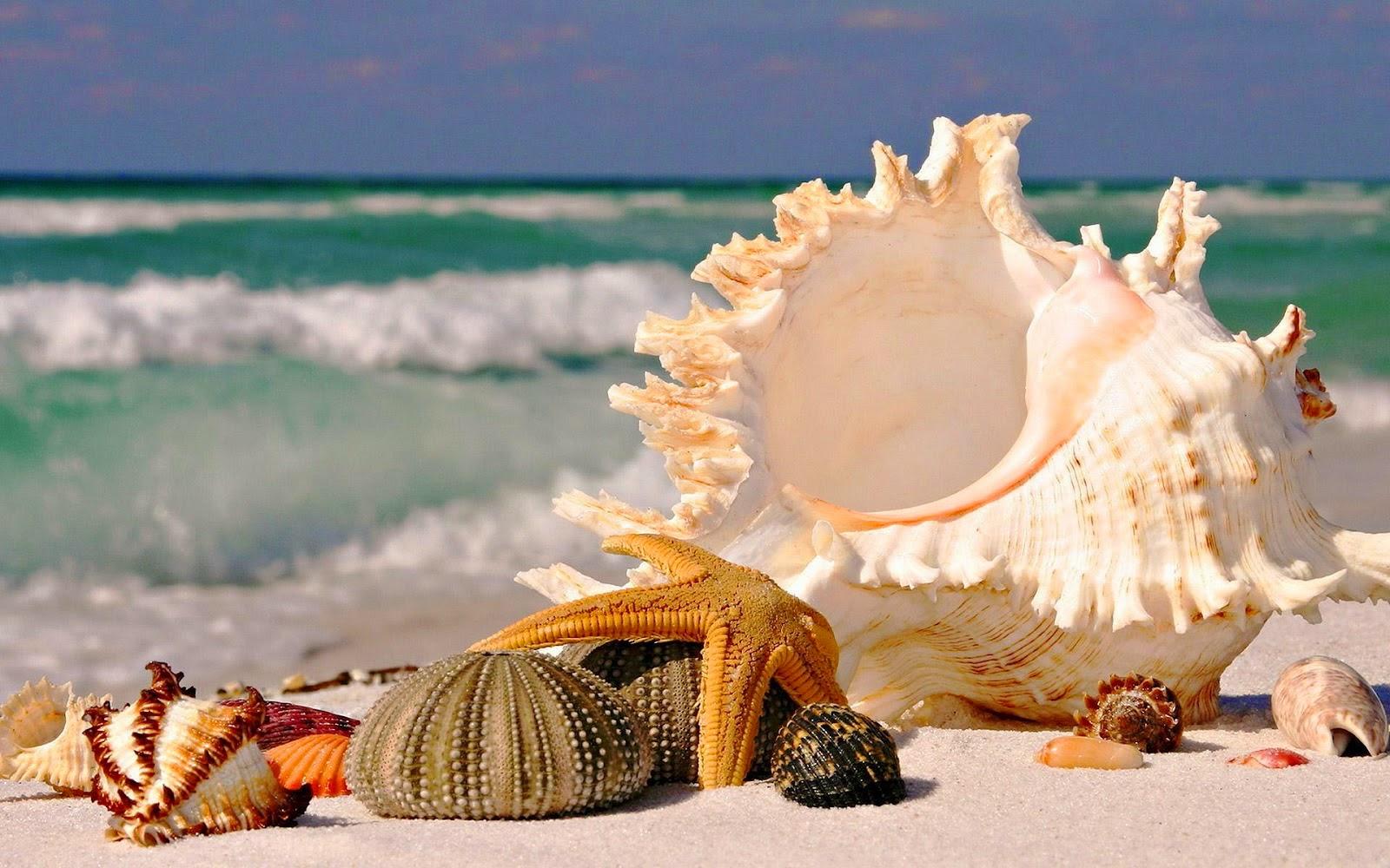 zomer-achtergrond-met-schelpen-op-het-zand-strand